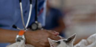 Améliorer les gestes vétérinaires