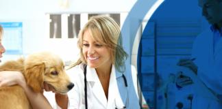 relation équipe vétérinaire client
