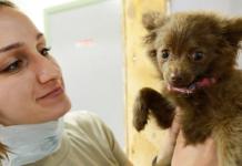 relation vétérinaire animal